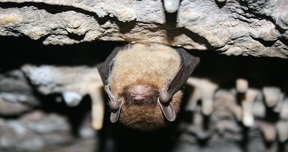 Protection of Indiana bats - Photo by USFWS Ann Froschauer