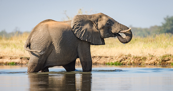 Elephants - Photo by Vince O'Sullivan