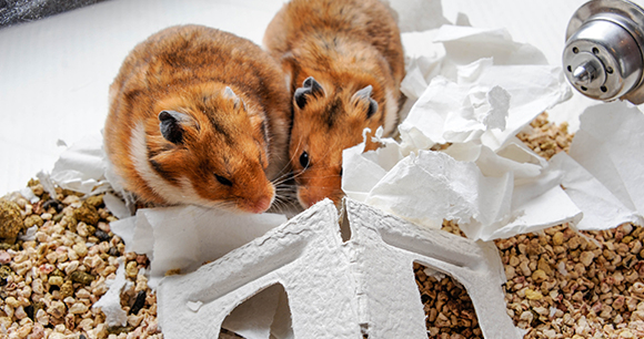Hamsters - Photo by Michele Cunneen