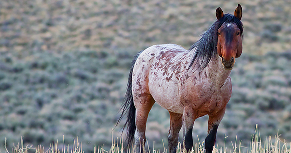 Wild horses - Photo by Ryan Brown