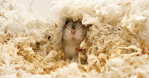Enrichment for mice - Photo by iStock